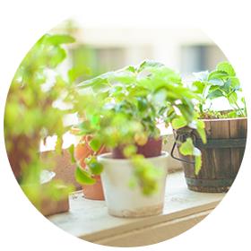 ZEROのちからの効果 植物の活性化