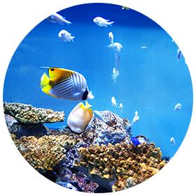 ZEROのちからの効果 水の浄化・魚の活性化